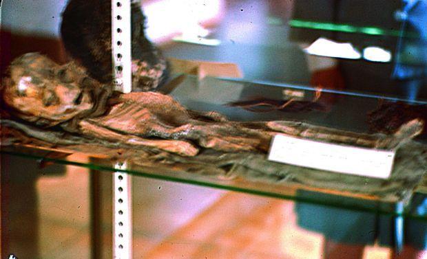 World's first outsider carcass?