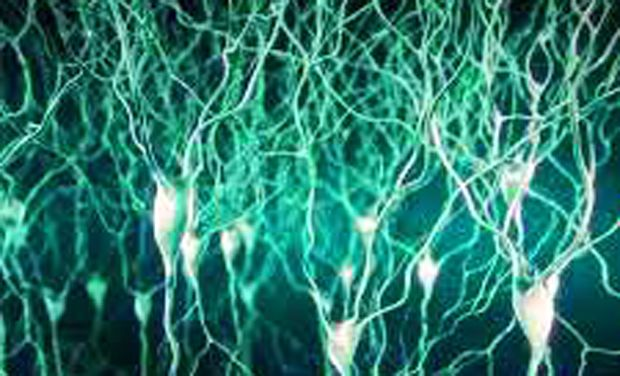 Neurons understands human words