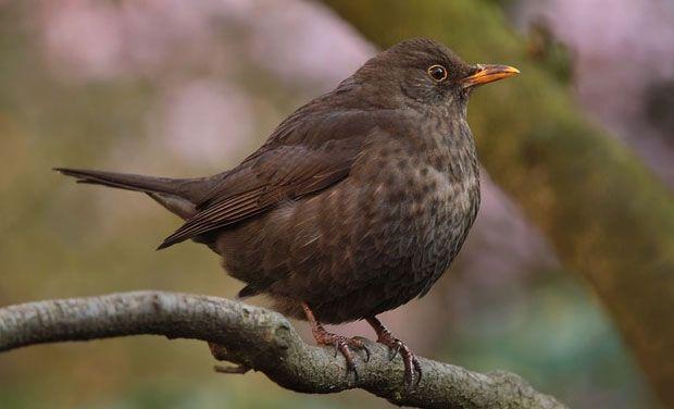 Birds can sacrifice food for love, study says