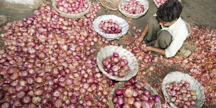 Onion exports fall 10% to 6.95 lakh tonnes in Apr-Dec