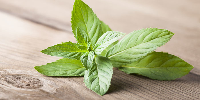 Mint can be used as anti-cancer drug!