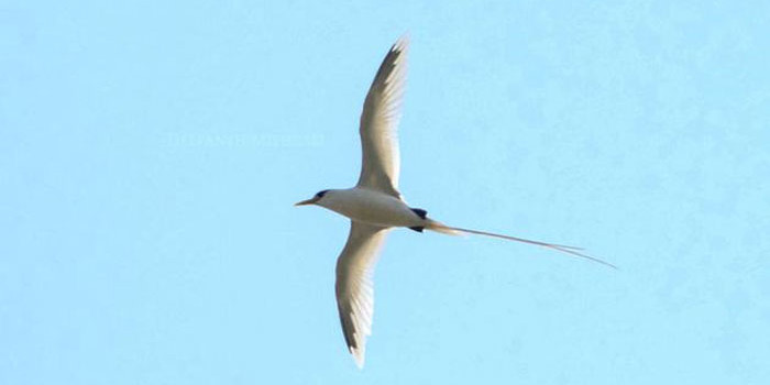 Image of this rare seabird spotted near Port Blair is truly mesmerising!