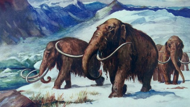 Humans, climate change together felled Ice Age giants