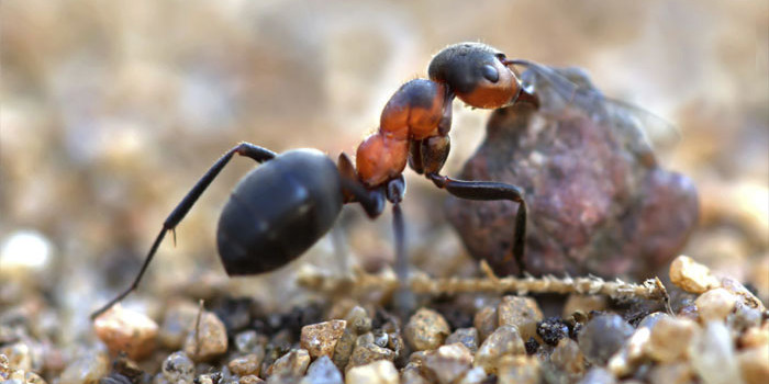Did you know that ants learnt farming even before humans? – Read