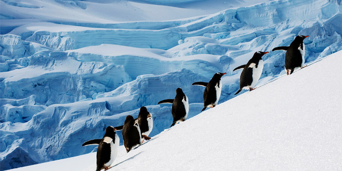 Thanks to natural forces, Antarctic temperature falls! But it's temporary