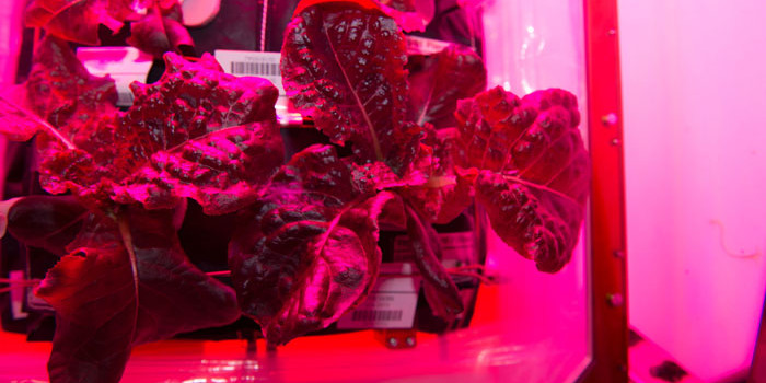 ISS astronauts plant third lettuce crop on space station!