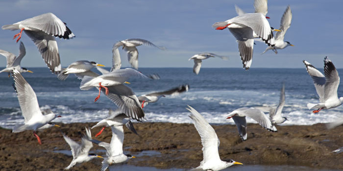 Ever wondered why seabirds consume plastic? Here's a clue