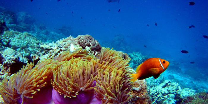 Scientists record worst ever coral die-off on Australia's Great Barrier Reef