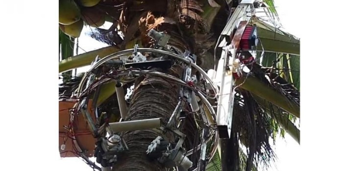 Indian researcher develops coconut fetching robot 'Cocobot'