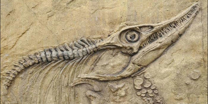 Flying fossil: Britain to send 'earliest known bird' abroad for exhibition!