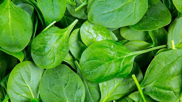 Scientists transform spinach leaf into beating human heart tissue